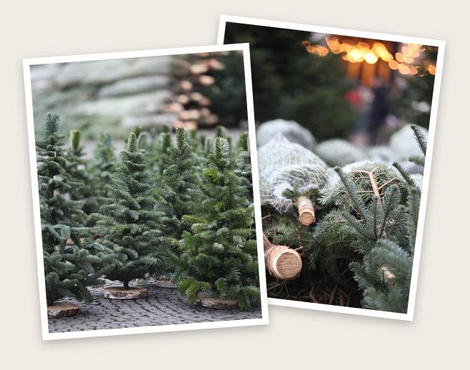 weihnachtsbaum kaufen in frankfurt christbaum center. Black Bedroom Furniture Sets. Home Design Ideas